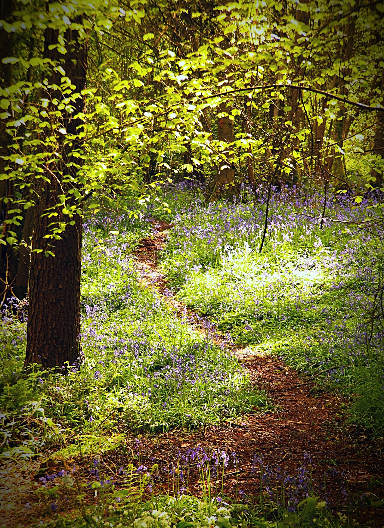 Footpath through the Woods by Yvonne Lewis