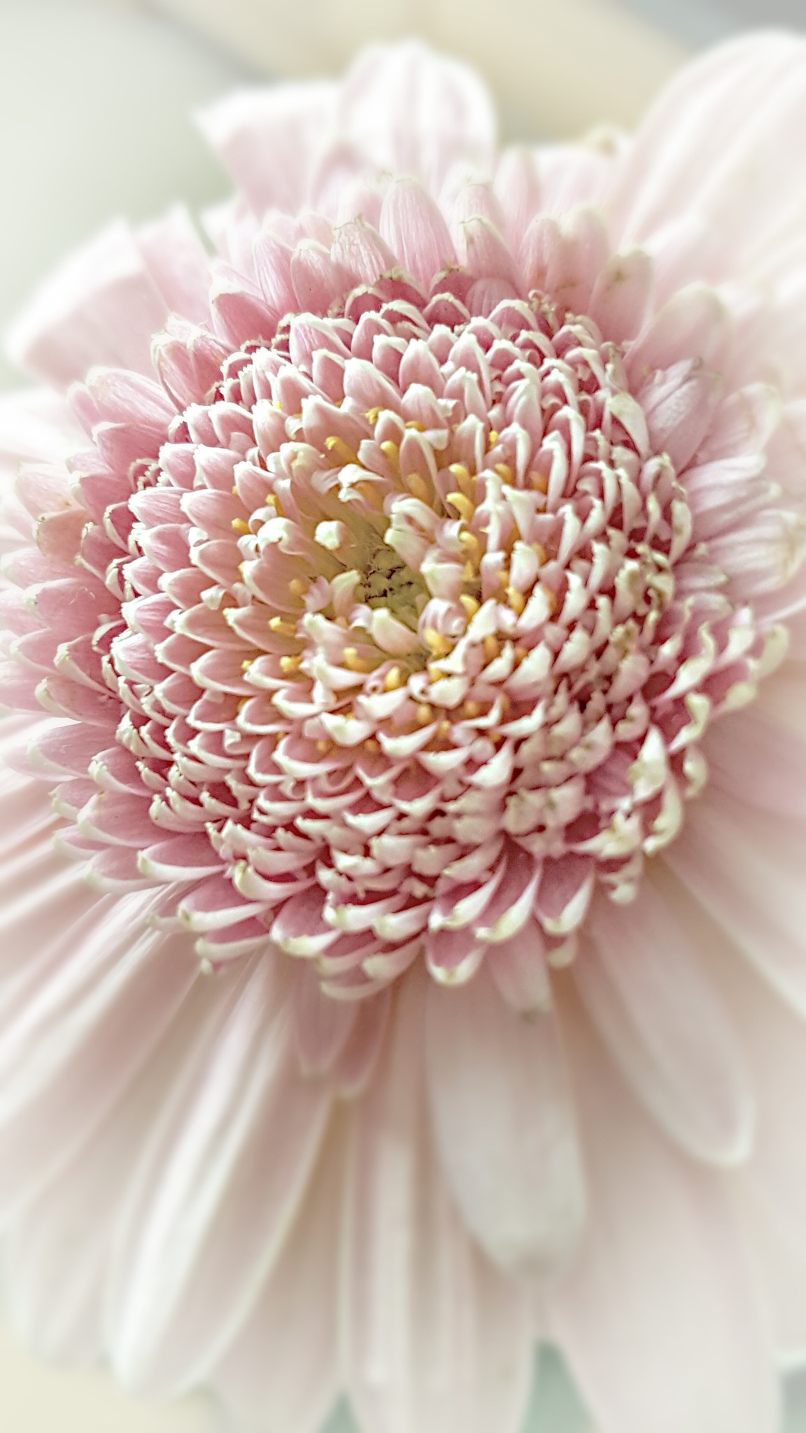 Flower Detail by Yvonne Lewis