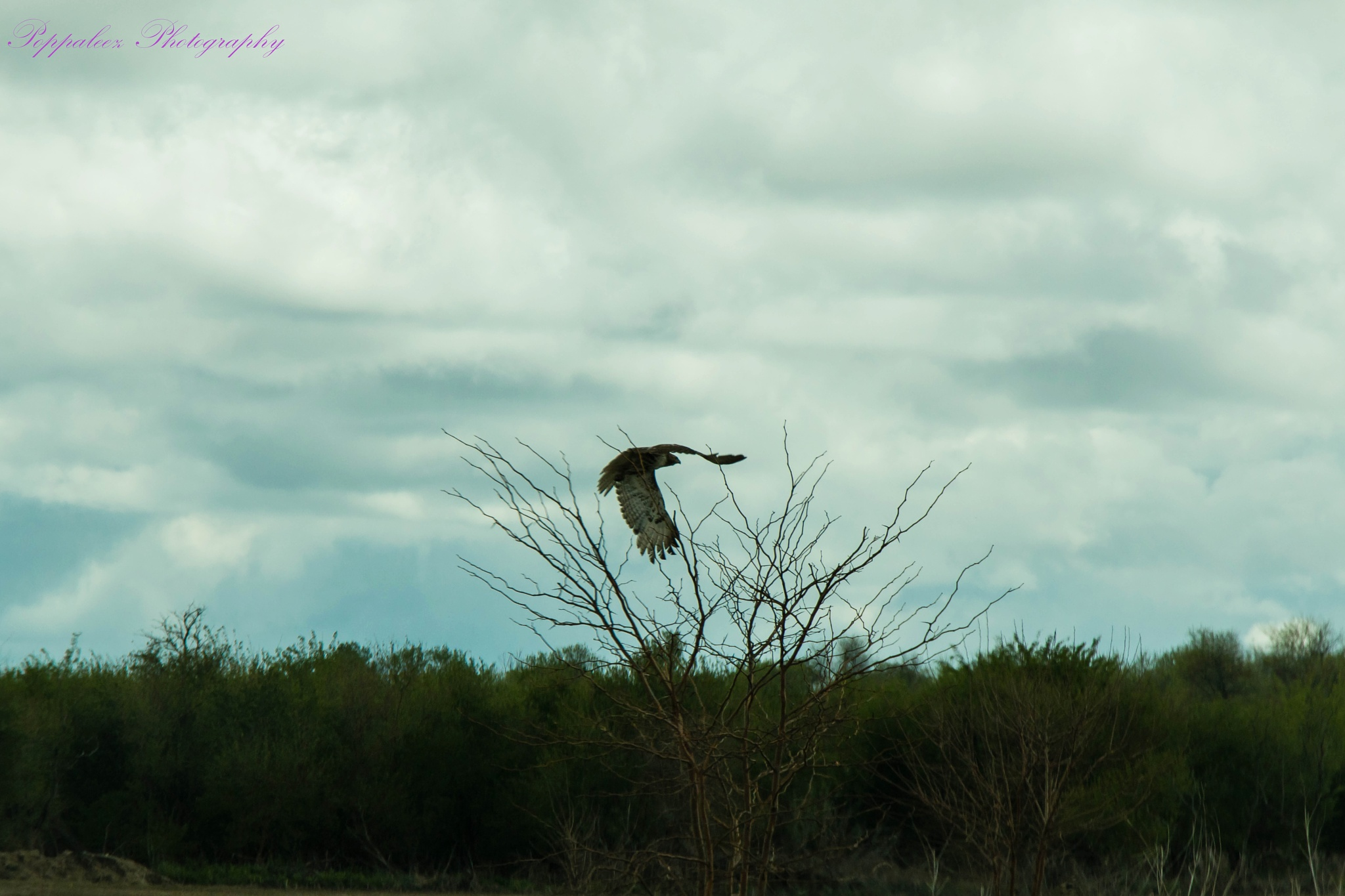 fly away by midwestphotobug