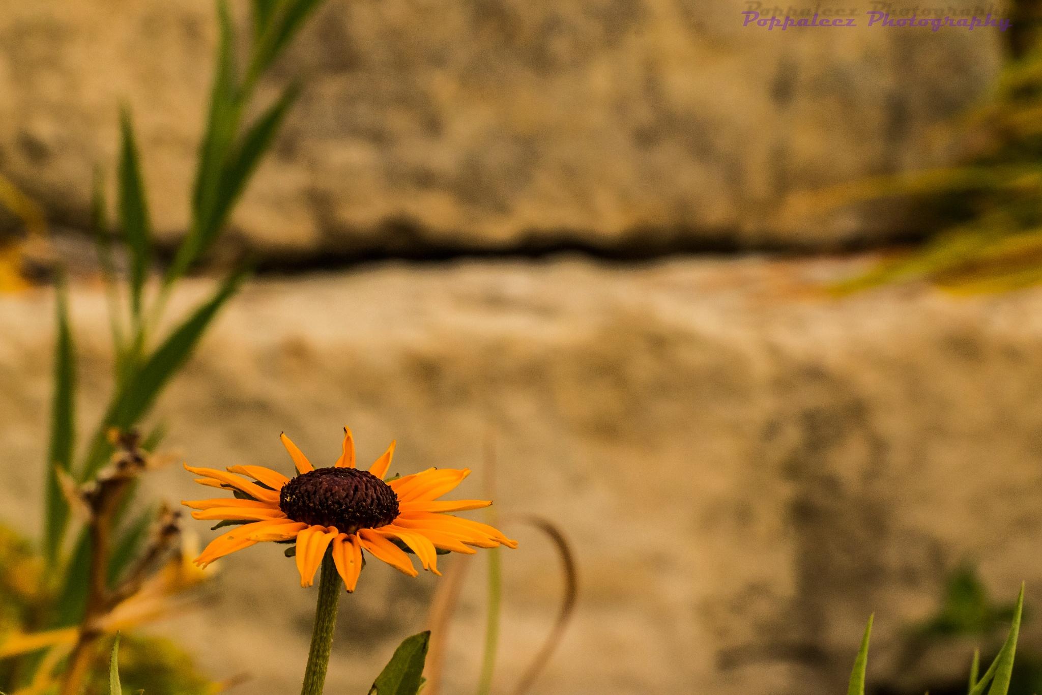 sunny side up by midwestphotobug