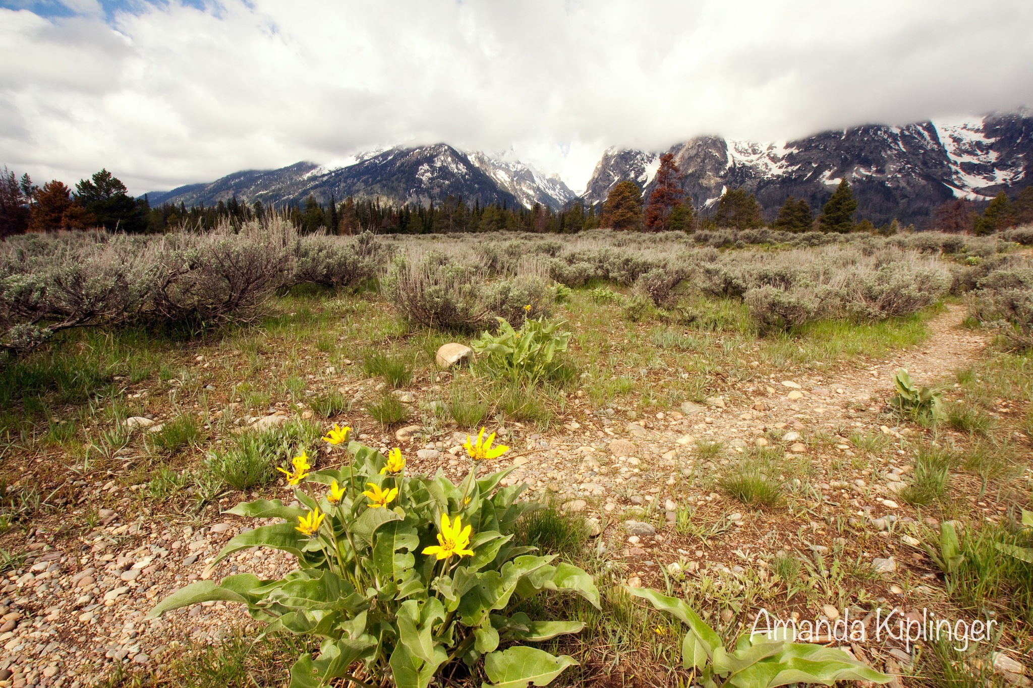 Mule Ear and Mountains by Amanda Kiplinger