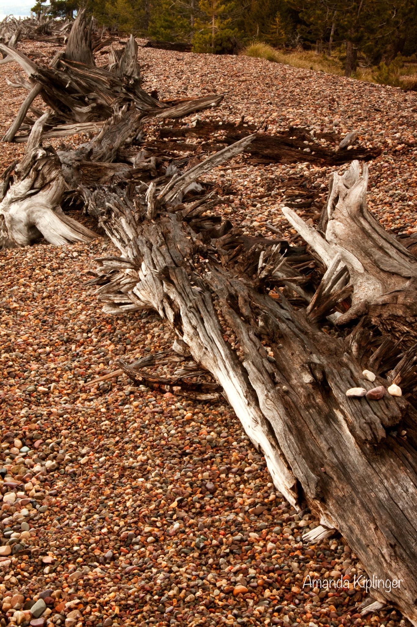 Driftwood and Rocks by Amanda Kiplinger