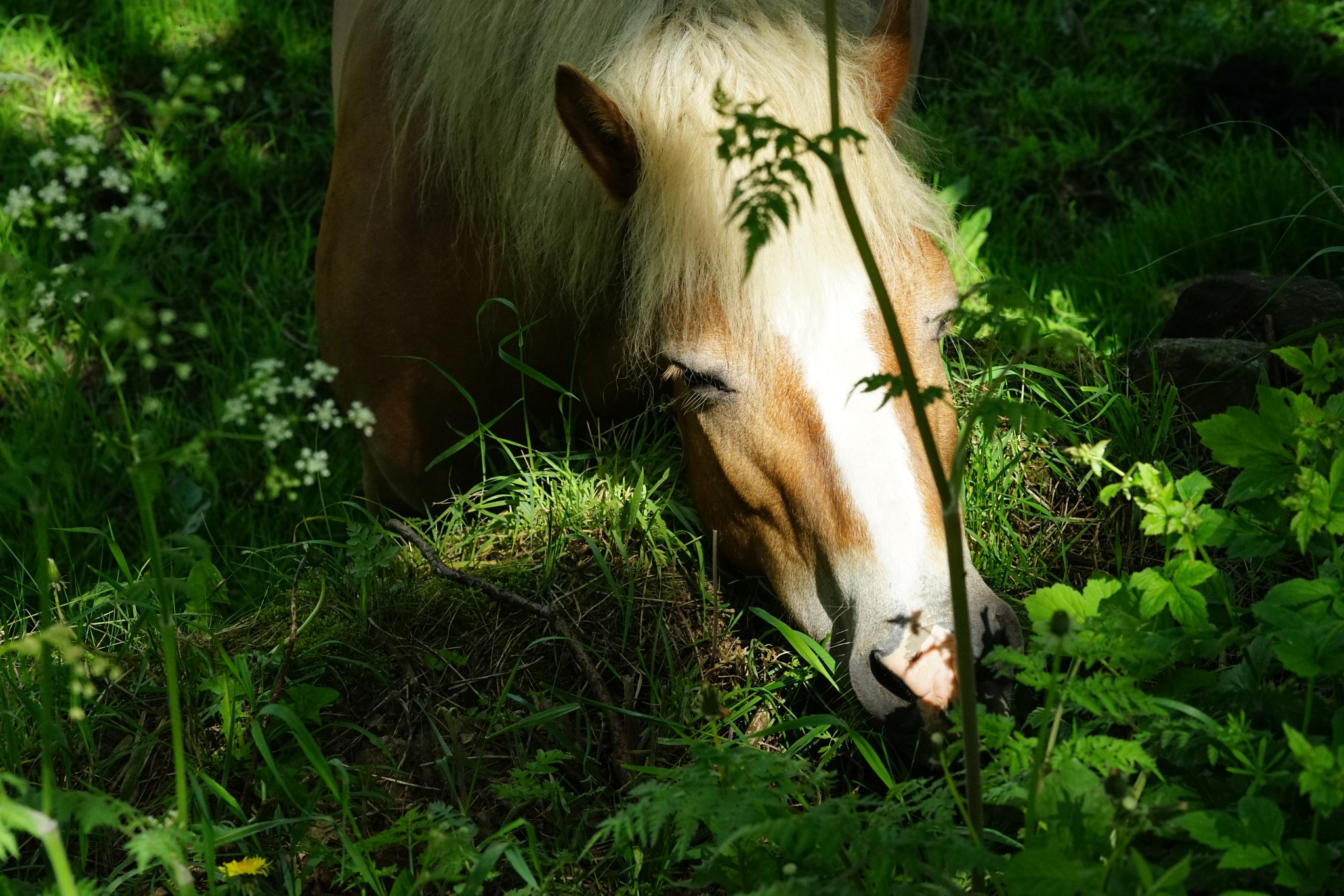 Just grazing by Isaac Matthews