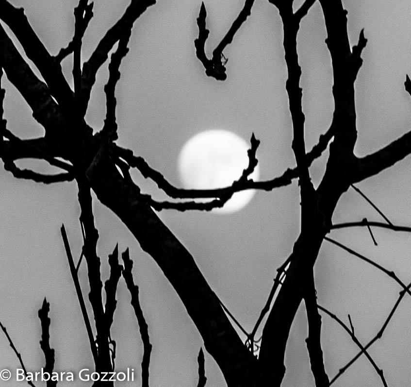 luna by BarbaraGozzoli