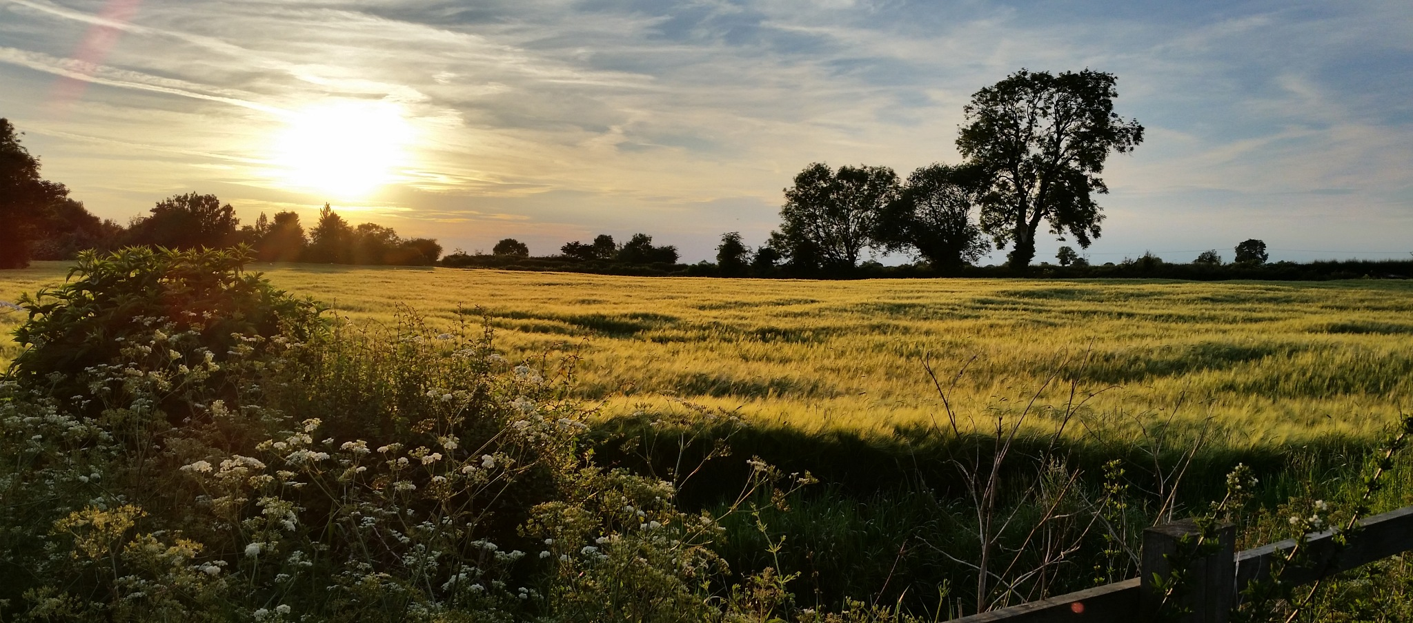 Barley Sunset by neiloswaldjones