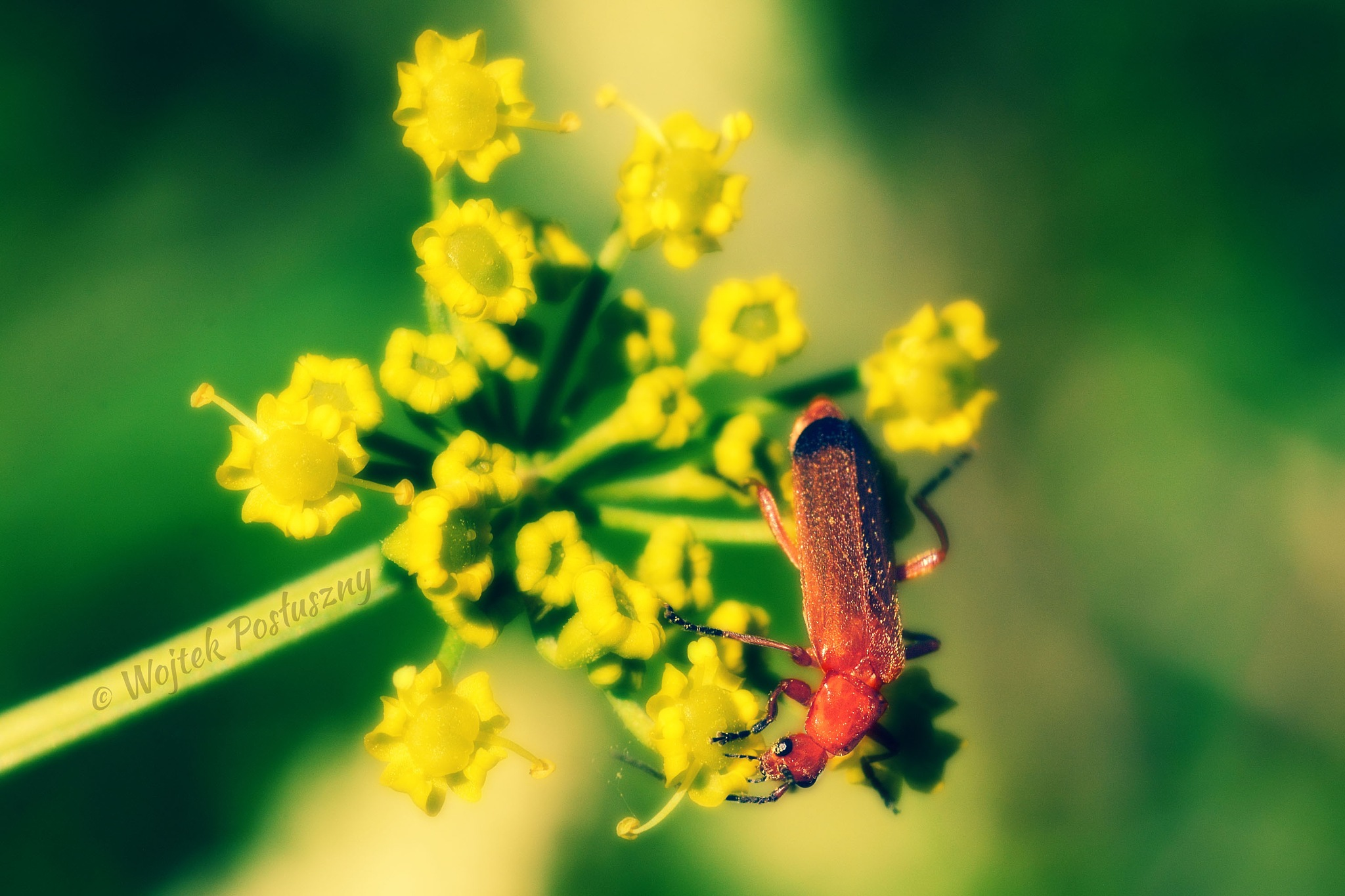 Photo in Animal #insect #flower #yellow #nature #nikon