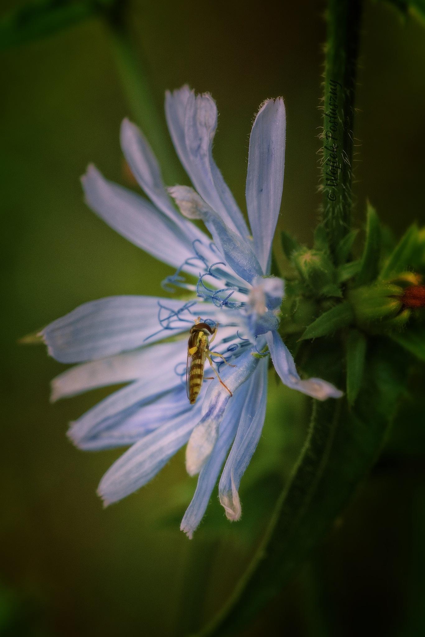 On the flower by Wojtek Posłuszny
