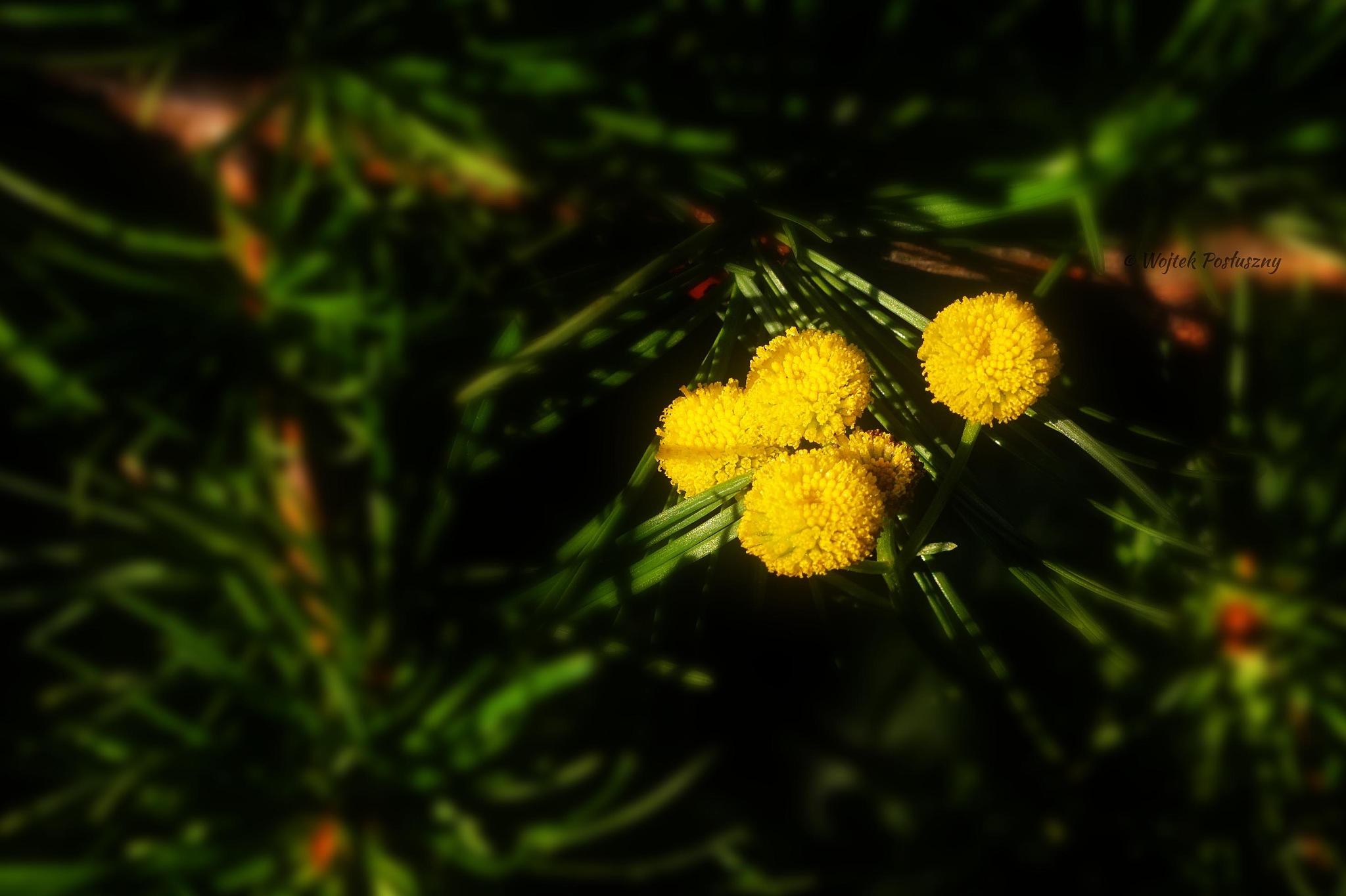 Yellow and green by Wojtek Posłuszny