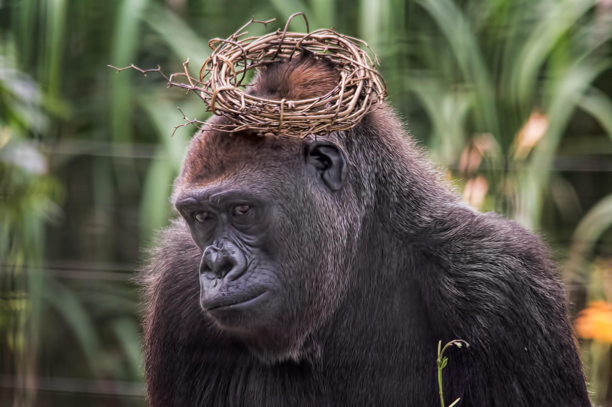 Monkeying Around by John Greg Jr