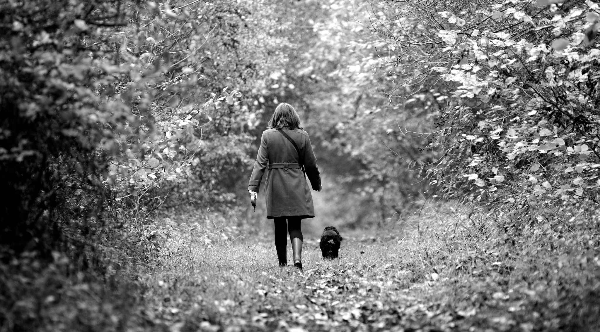 Photo in Black and White #woods black and white winter #dog #walking