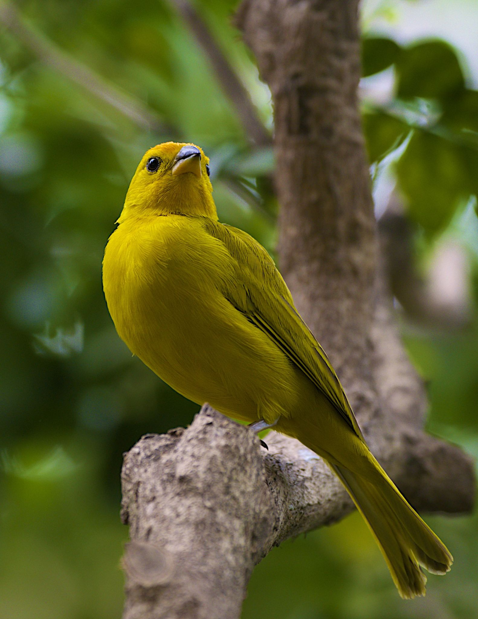 Golden Parrot by Gary Esoldi