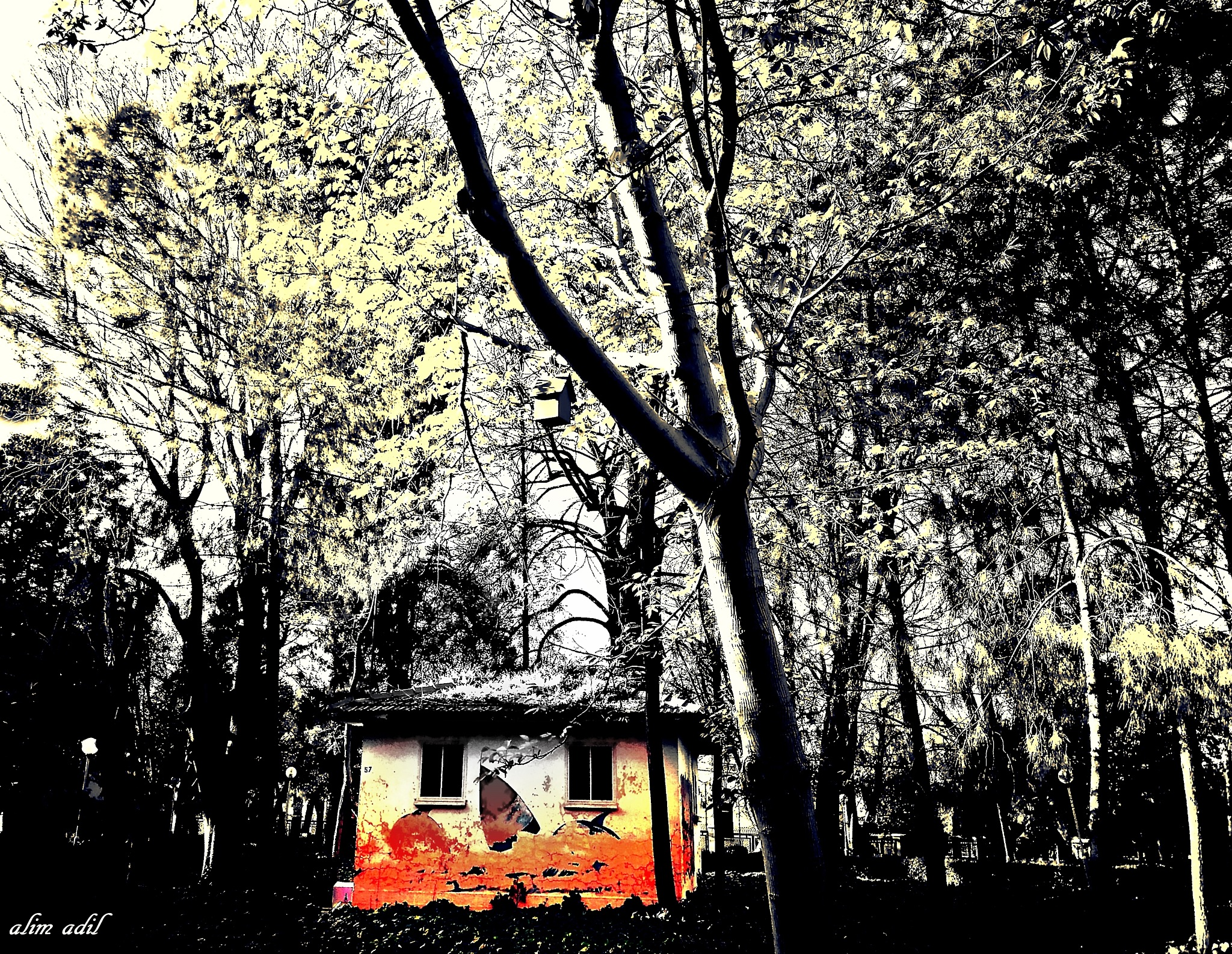 and autumn.. my loneliness! 1 by alim adil