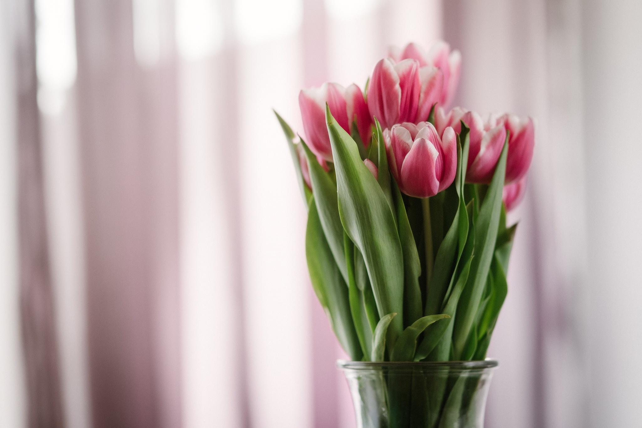 tulips in glass by Angela Zaugg