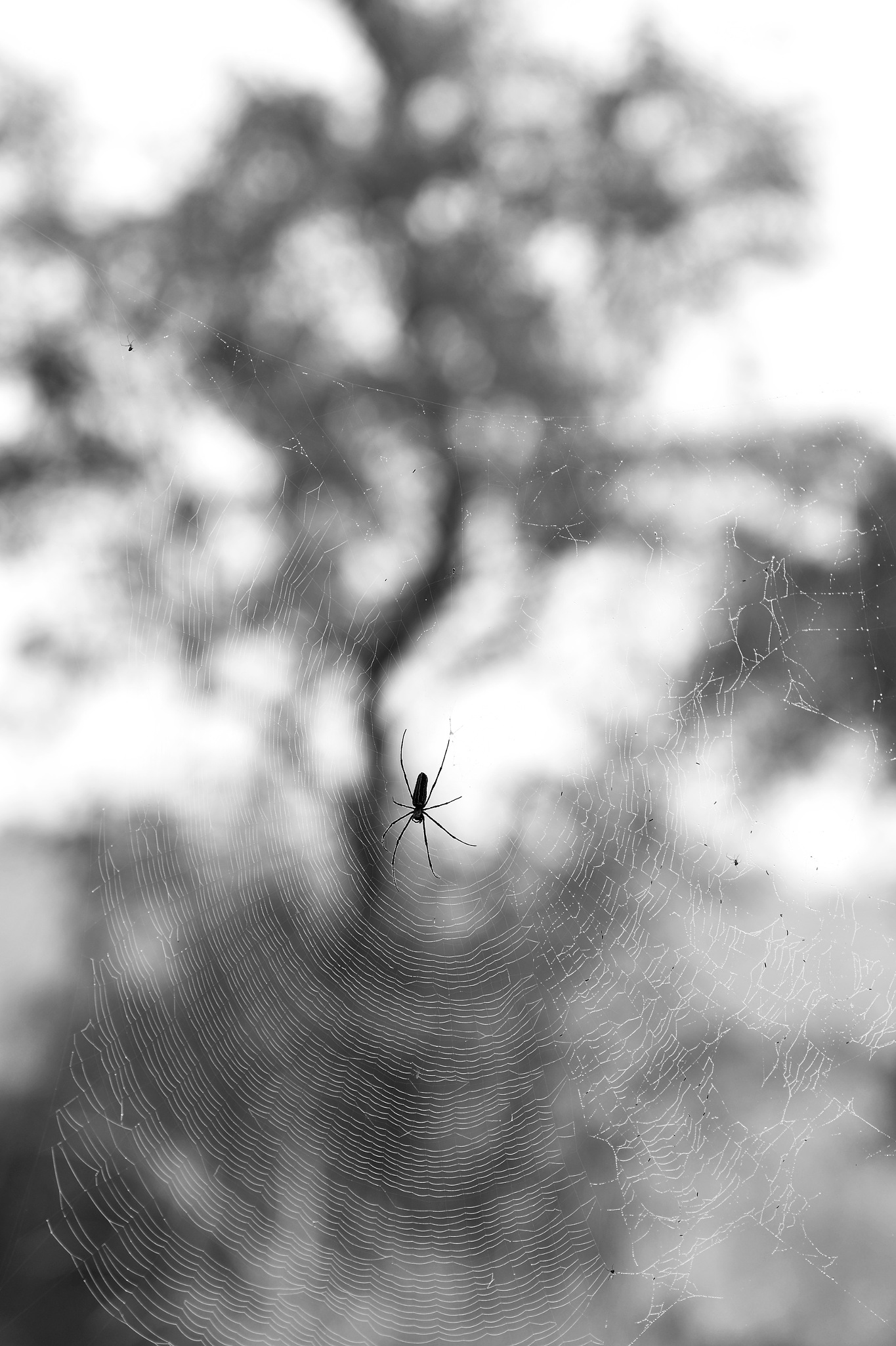 Miniature in the web. by SapnaAgrawal
