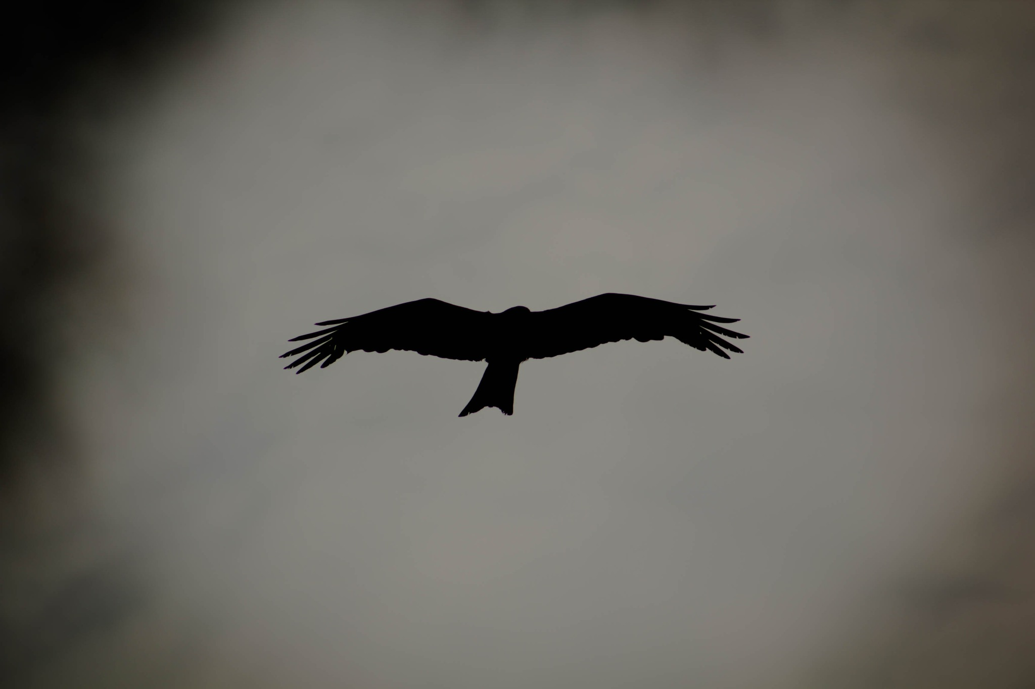 Flying High by SapnaAgrawal