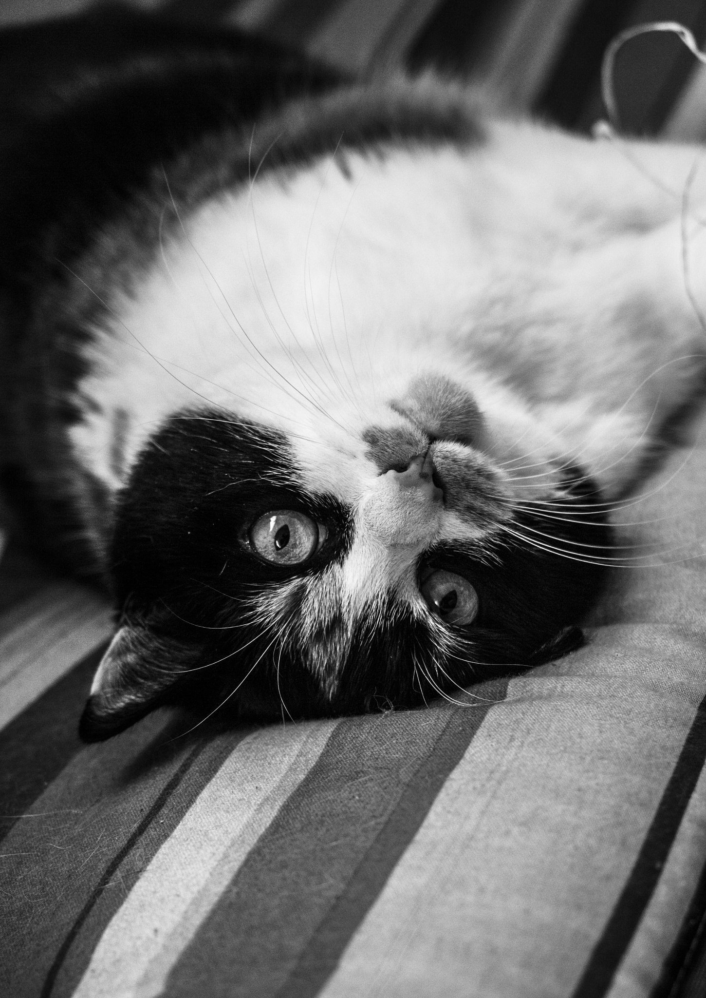 My cat  posing :) by Luka Smigoc