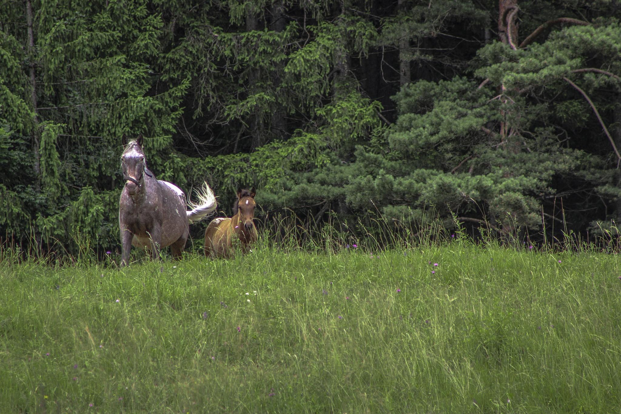 Photo in Animal #horse  canon animals