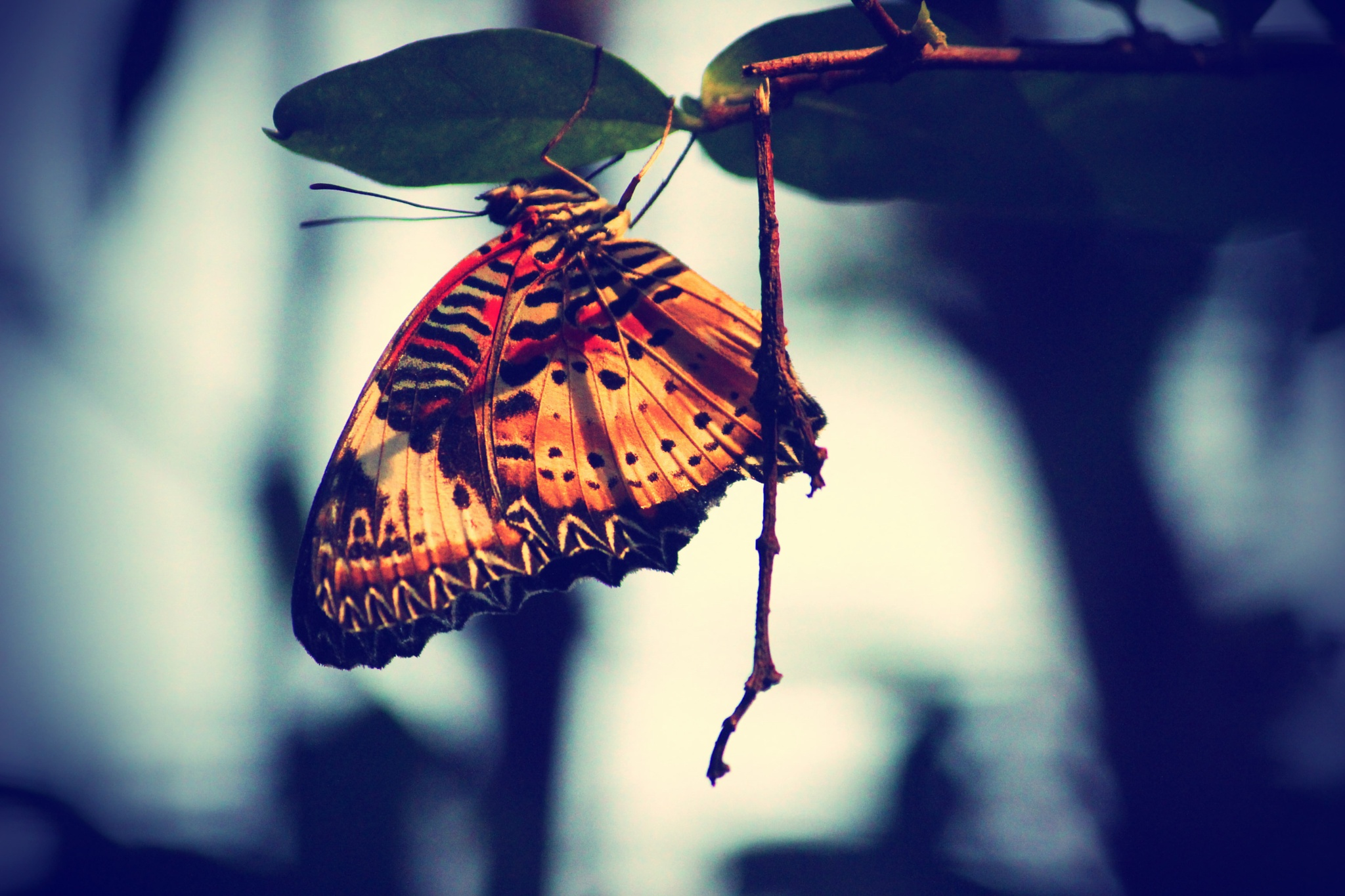 Photo in Animal #animals #colour #photography #insects