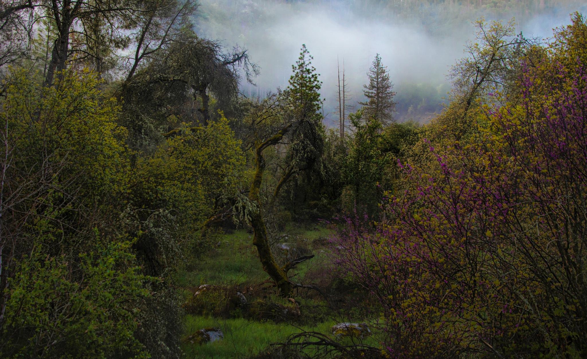 Nature always wear the colors of spirit! by Harleybroker