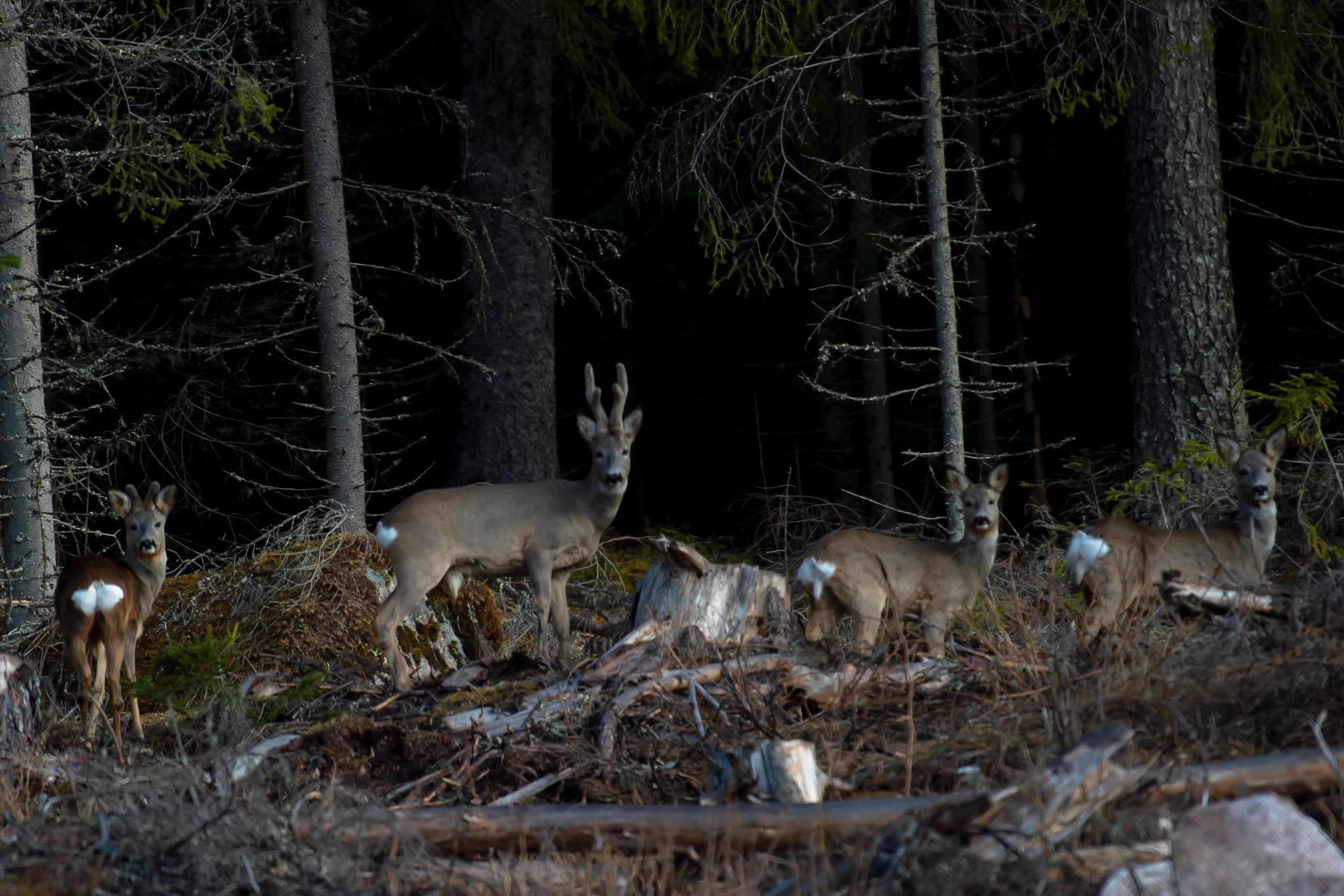 A Deer family! by Harleybroker