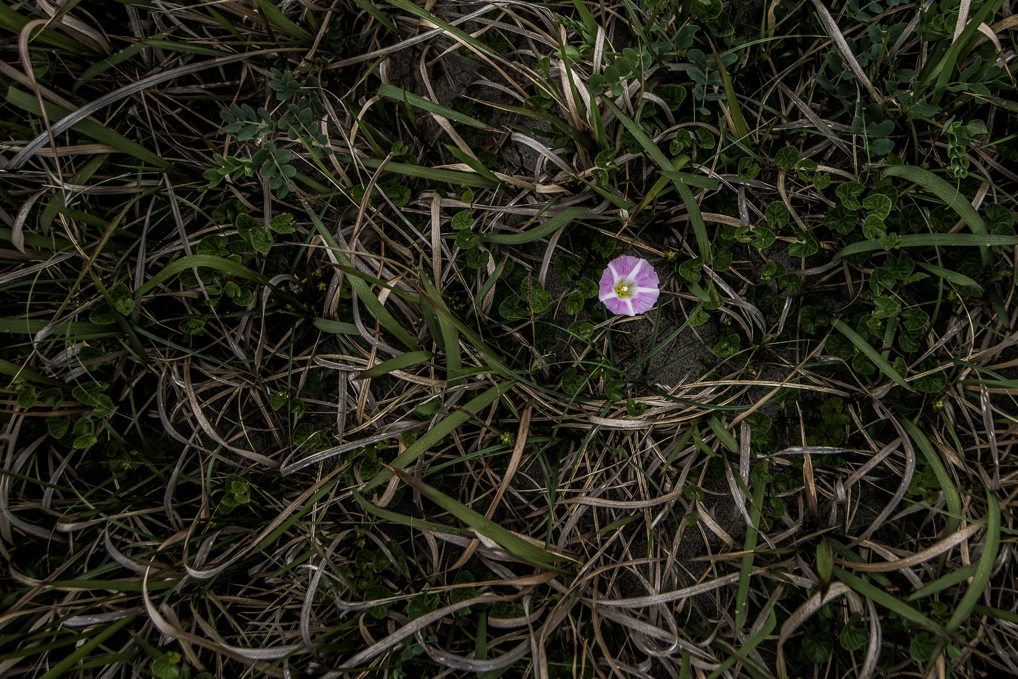 Single Flower. by Shozo kudo