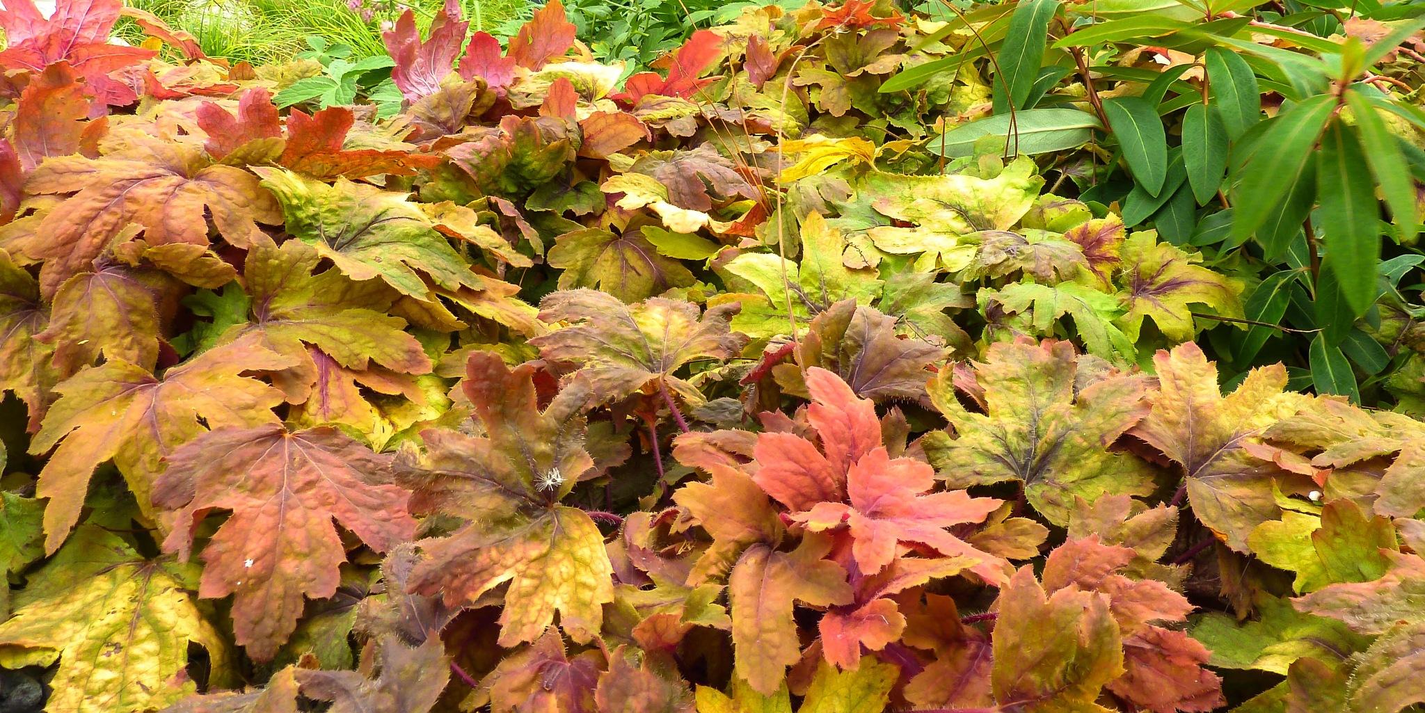 Colors of an Autumn by Glauco Rezende