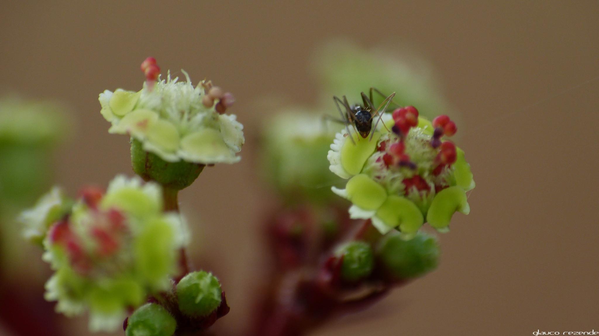 la Petite Fleur et la Fourmi by Glauco Rezende