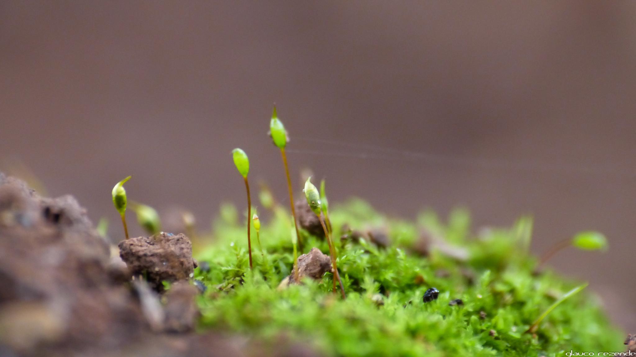 Micro garden by Glauco Rezende