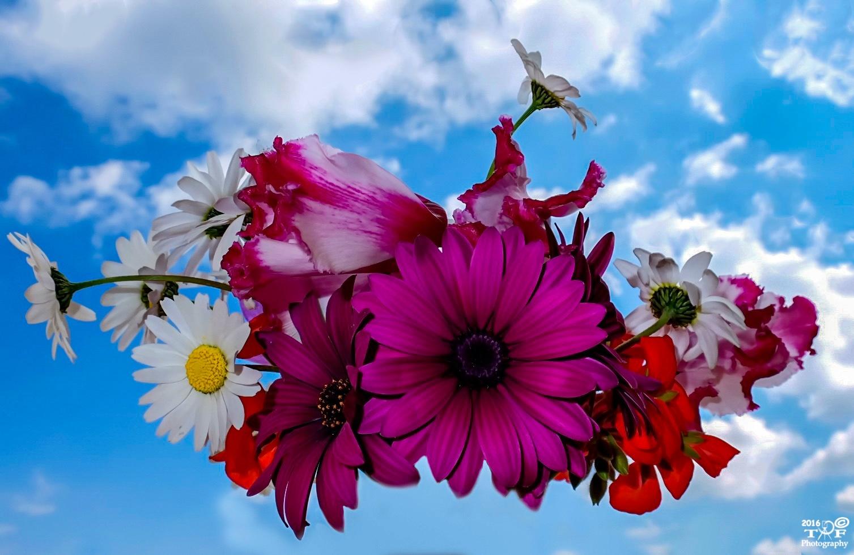 Spring! by Theotokis Flemotomos