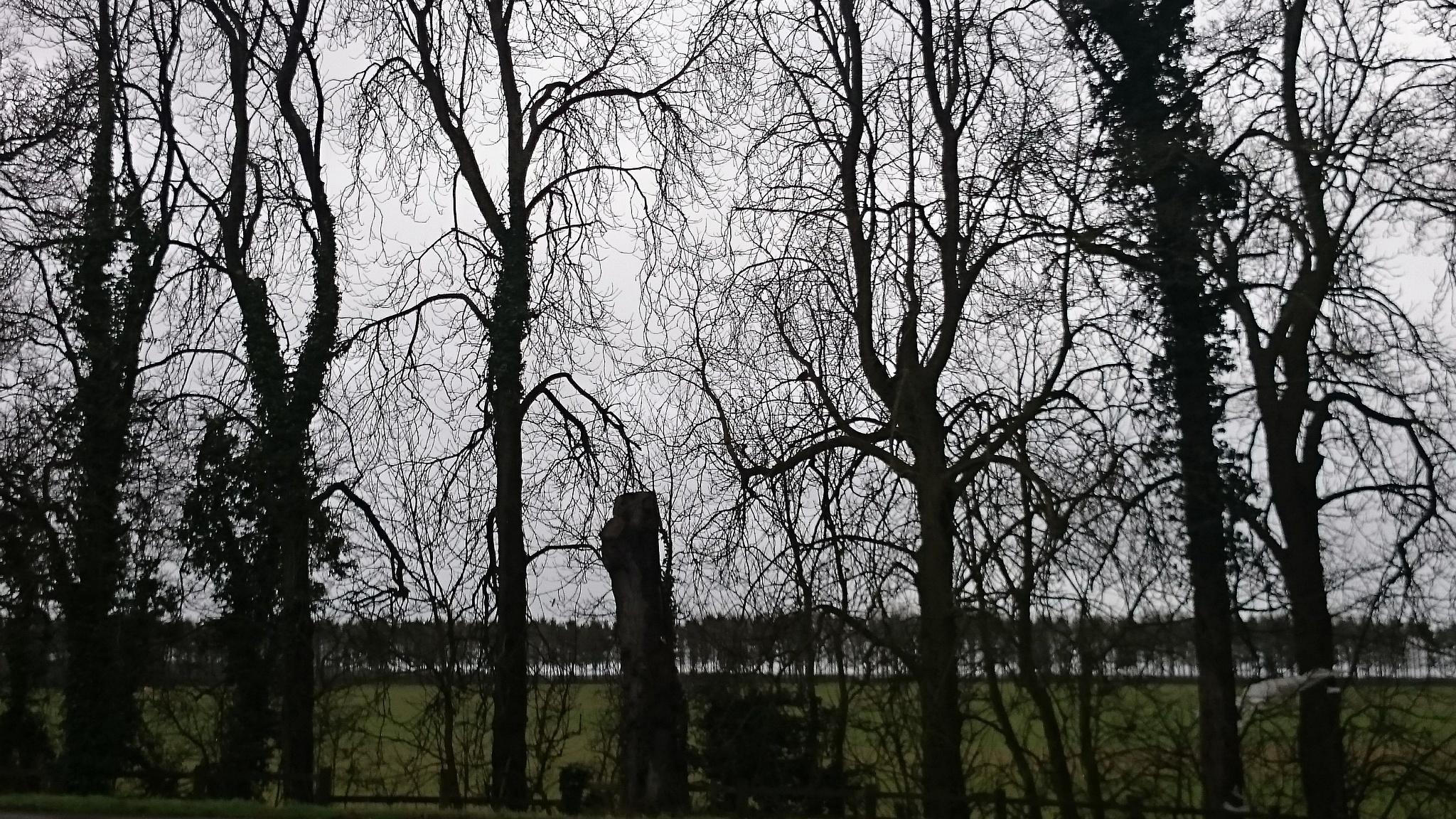 Winter trees  by Jon Brooke-Langham