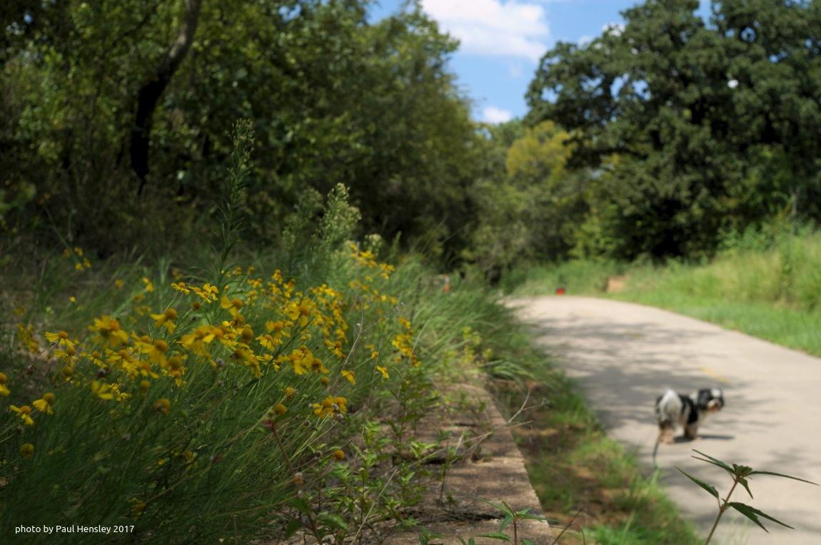 wildflowers along the walkway by pvh_foto