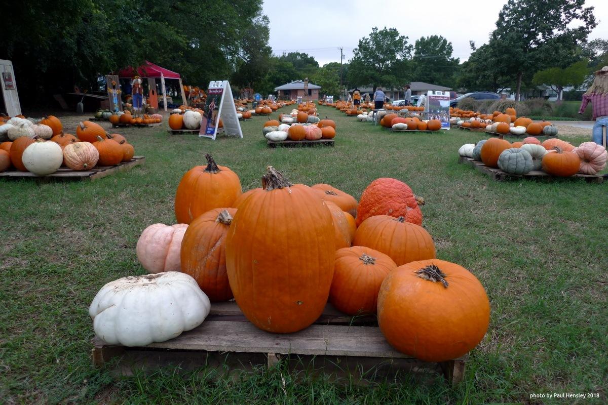 pallets of pumpkins by pvh_foto