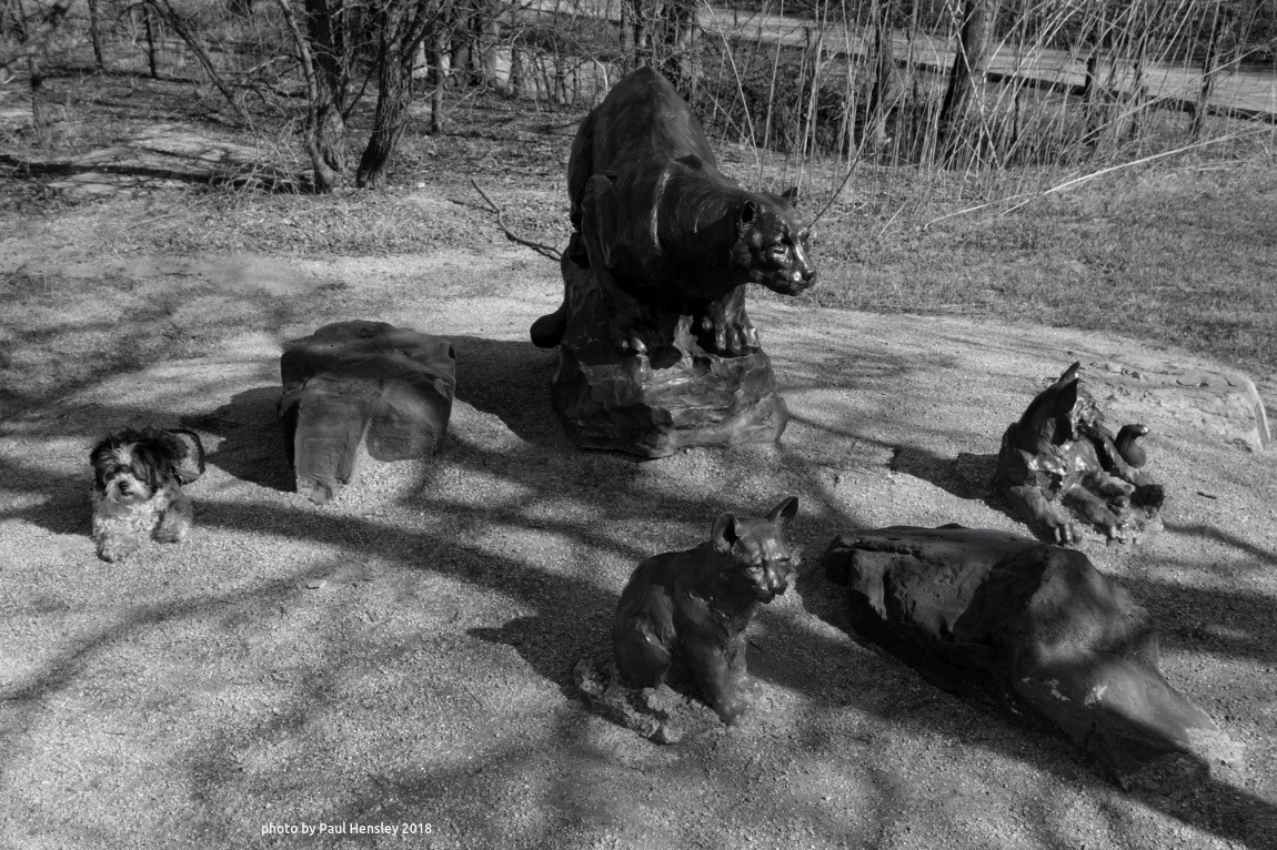 hanging with the big cats by pvh_foto
