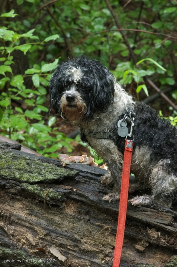 soggy doggy by pvh_foto