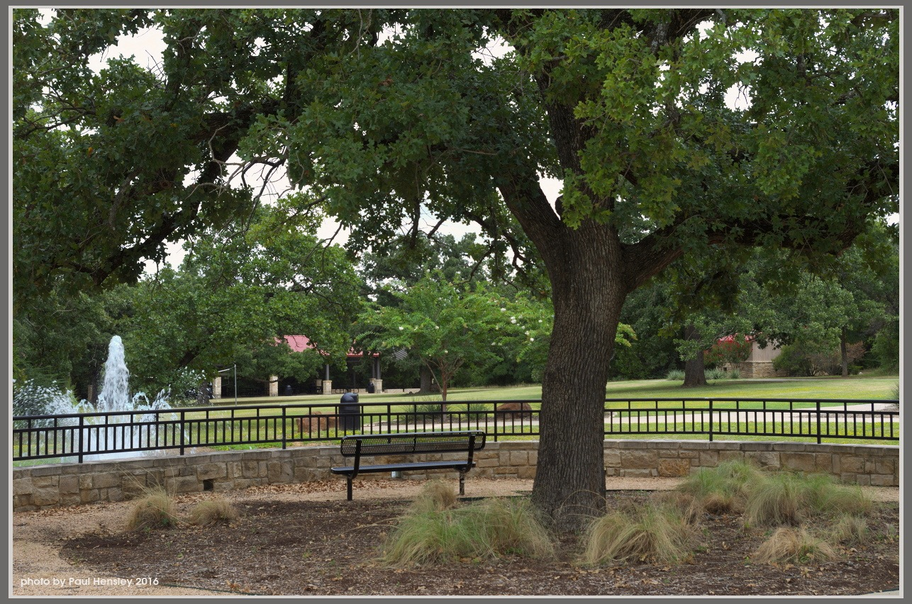 bench under the tree by pvh_foto