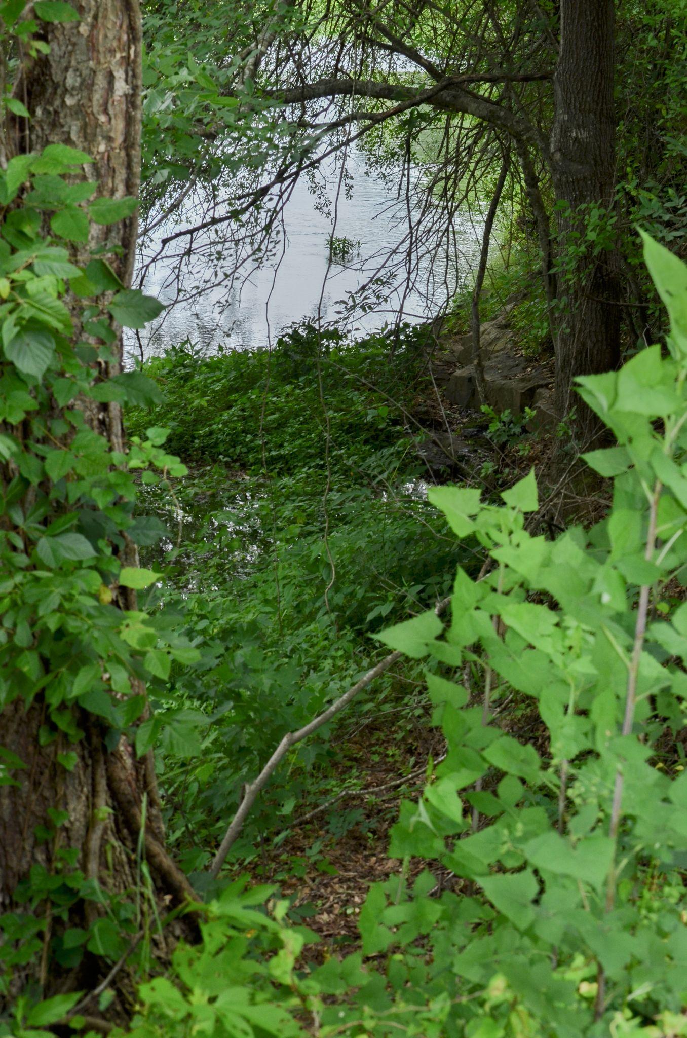Peek into nature by Bernice Thompson