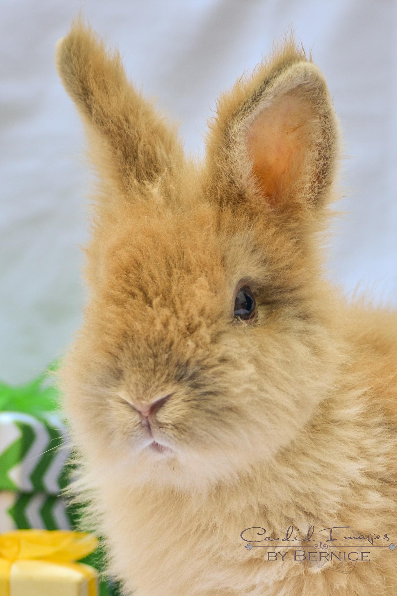 Orange baby bunny by Bernice Thompson