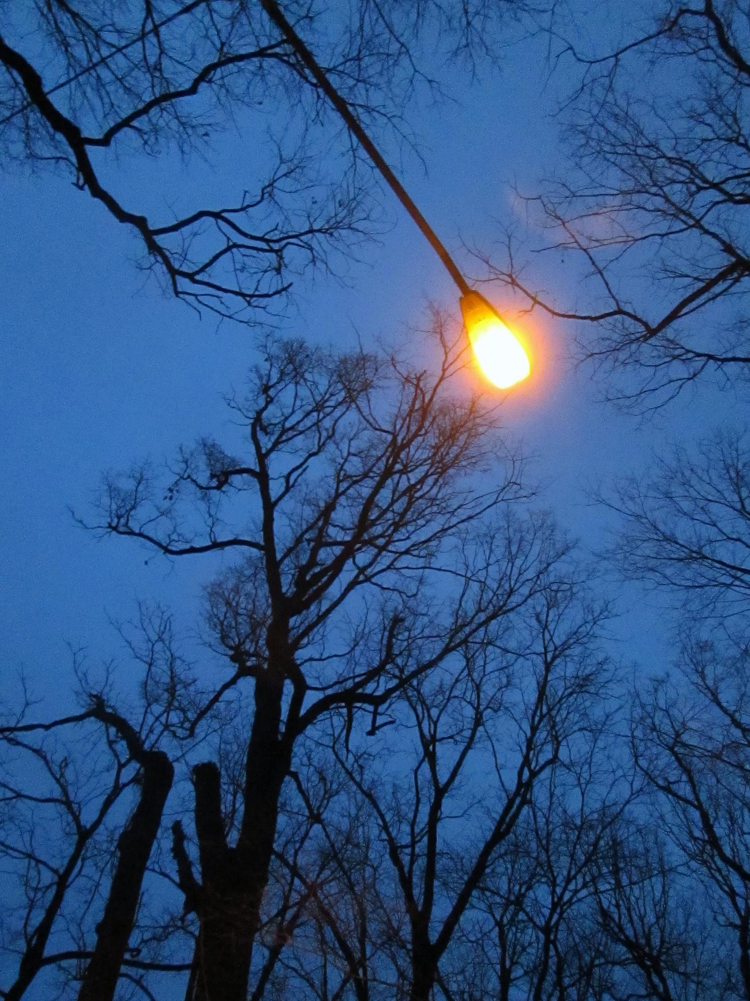 Illumination by Zebb