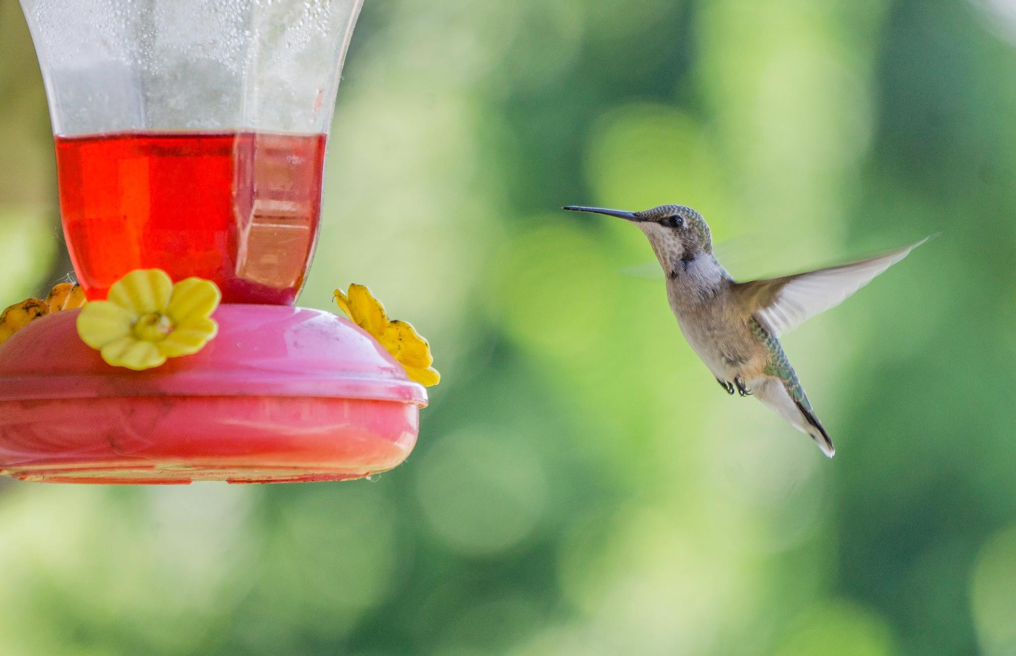 Humming Bird by Dustin Edwards