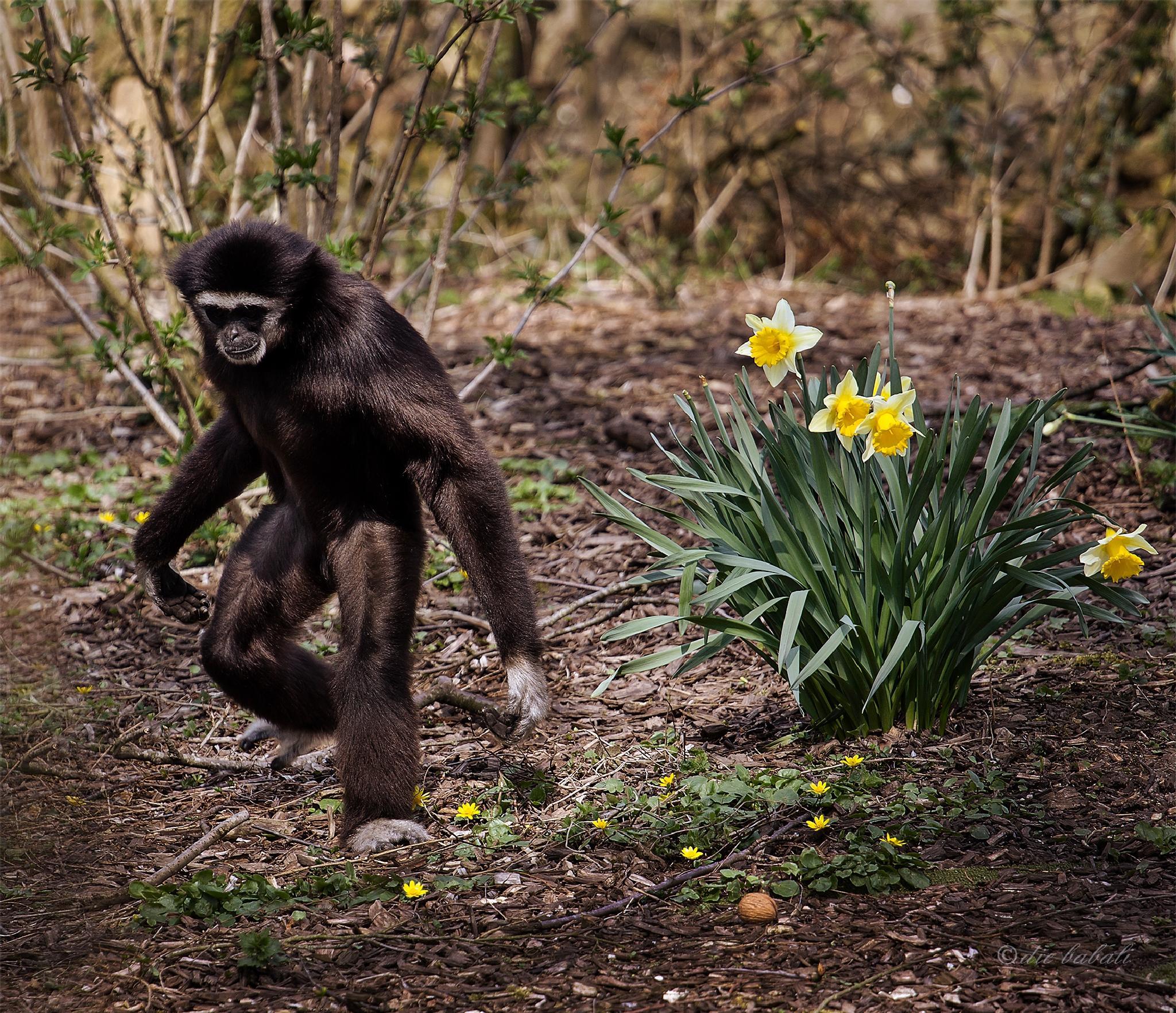 spring time by Elke Gamsjäger