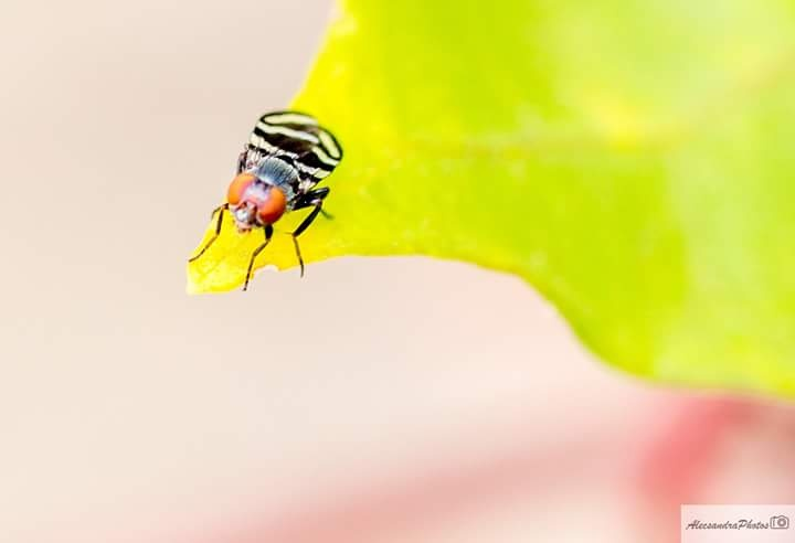 Photo in Macro #dehoje #macro #perfect #moscafashion #naturezaperfeita #amofotografia #insect #canon #photografylovers