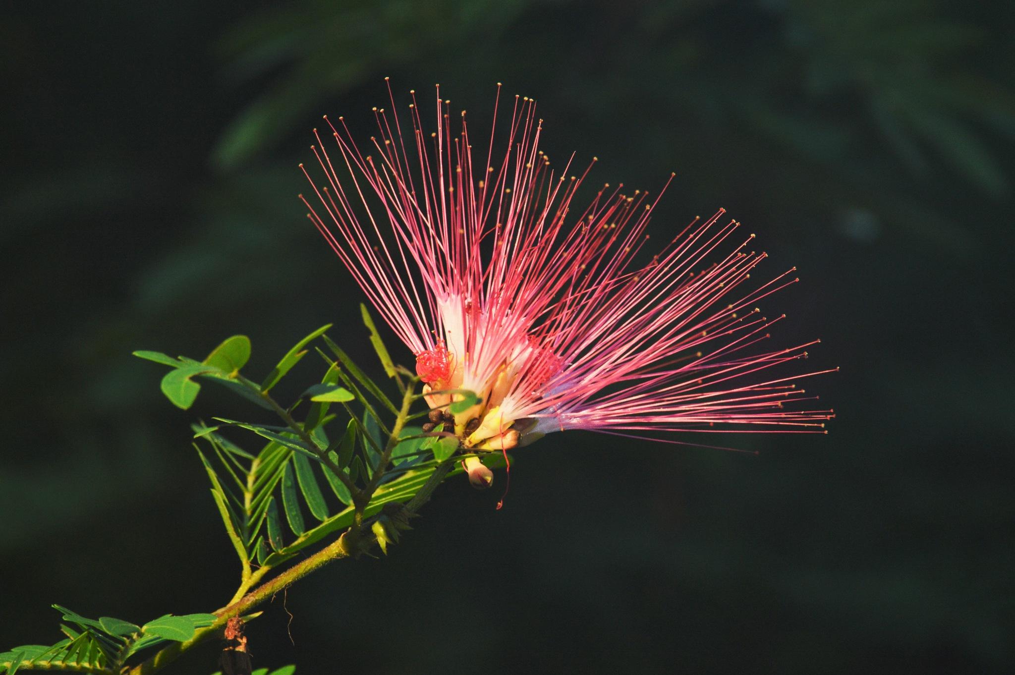 Flower Power by LydiaJeanMay