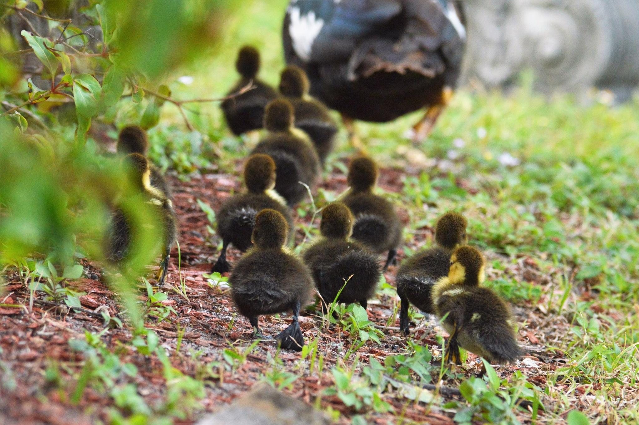 Follow along little ones by LydiaJeanMay