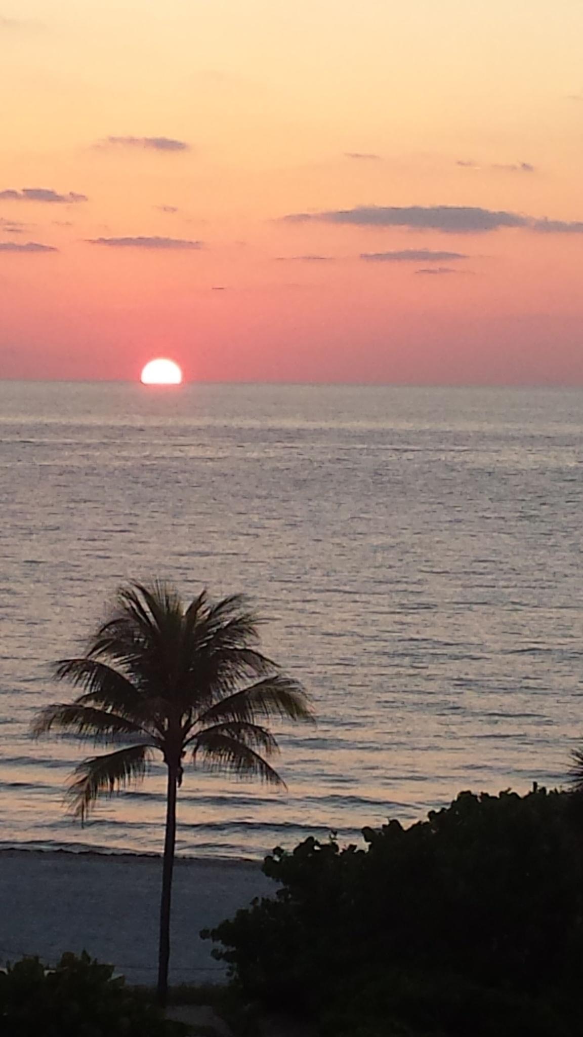Photo in Landscape #sunrise #beach #palm trees #sky #horizon #ocean #sand #pretty #beautiful #phone picture