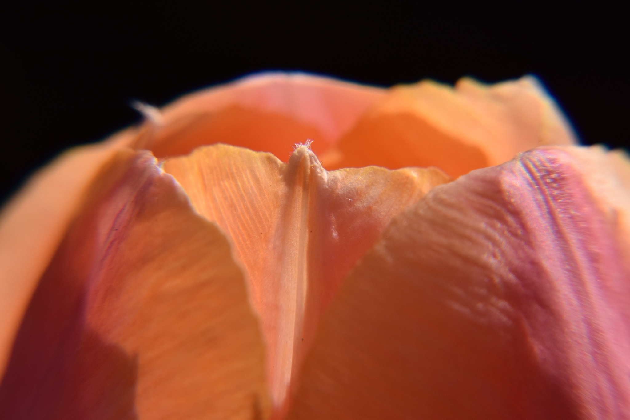 Light on my tulip by LydiaJeanMay