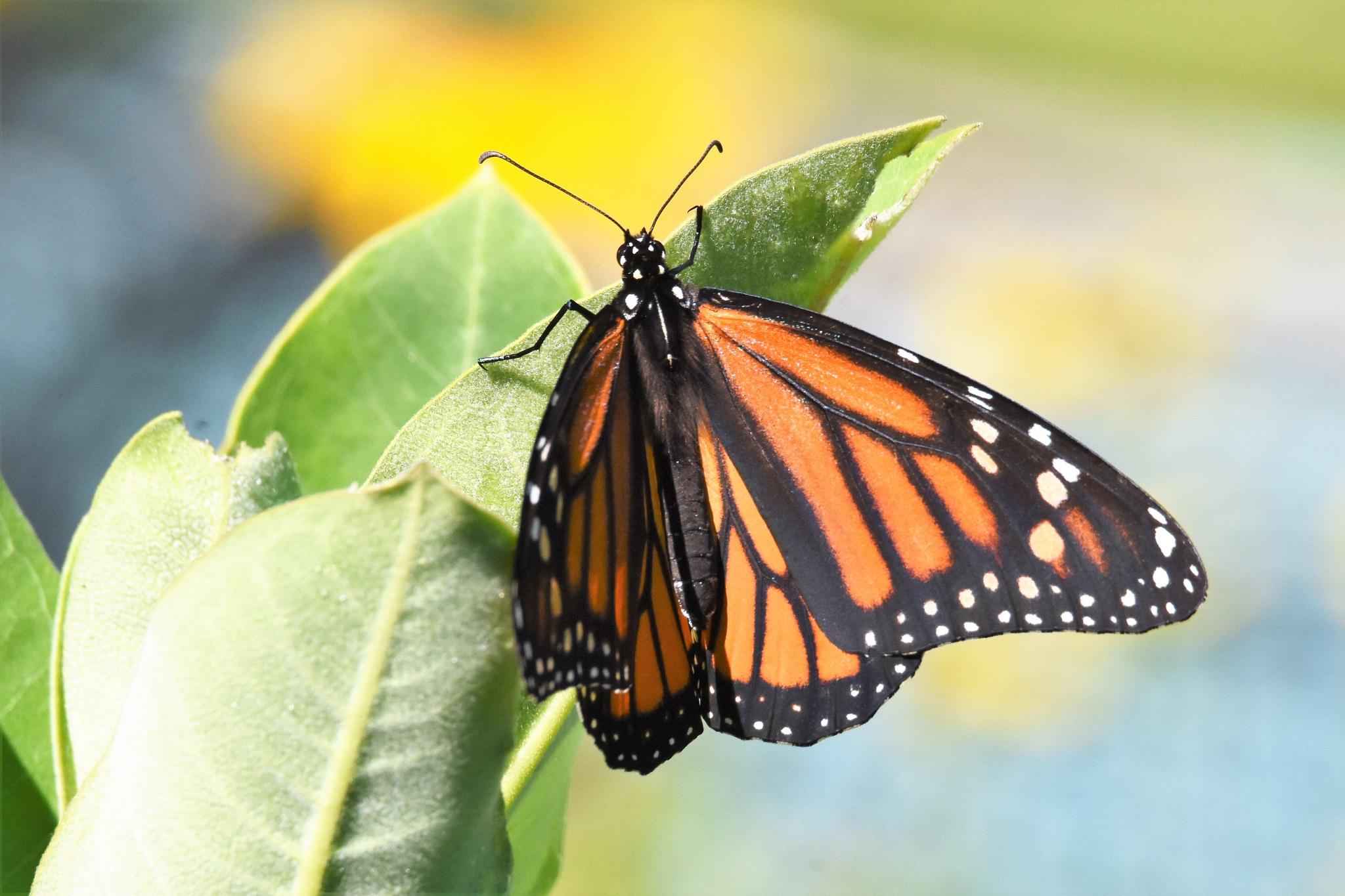 The butterfly garden by LydiaJeanMay