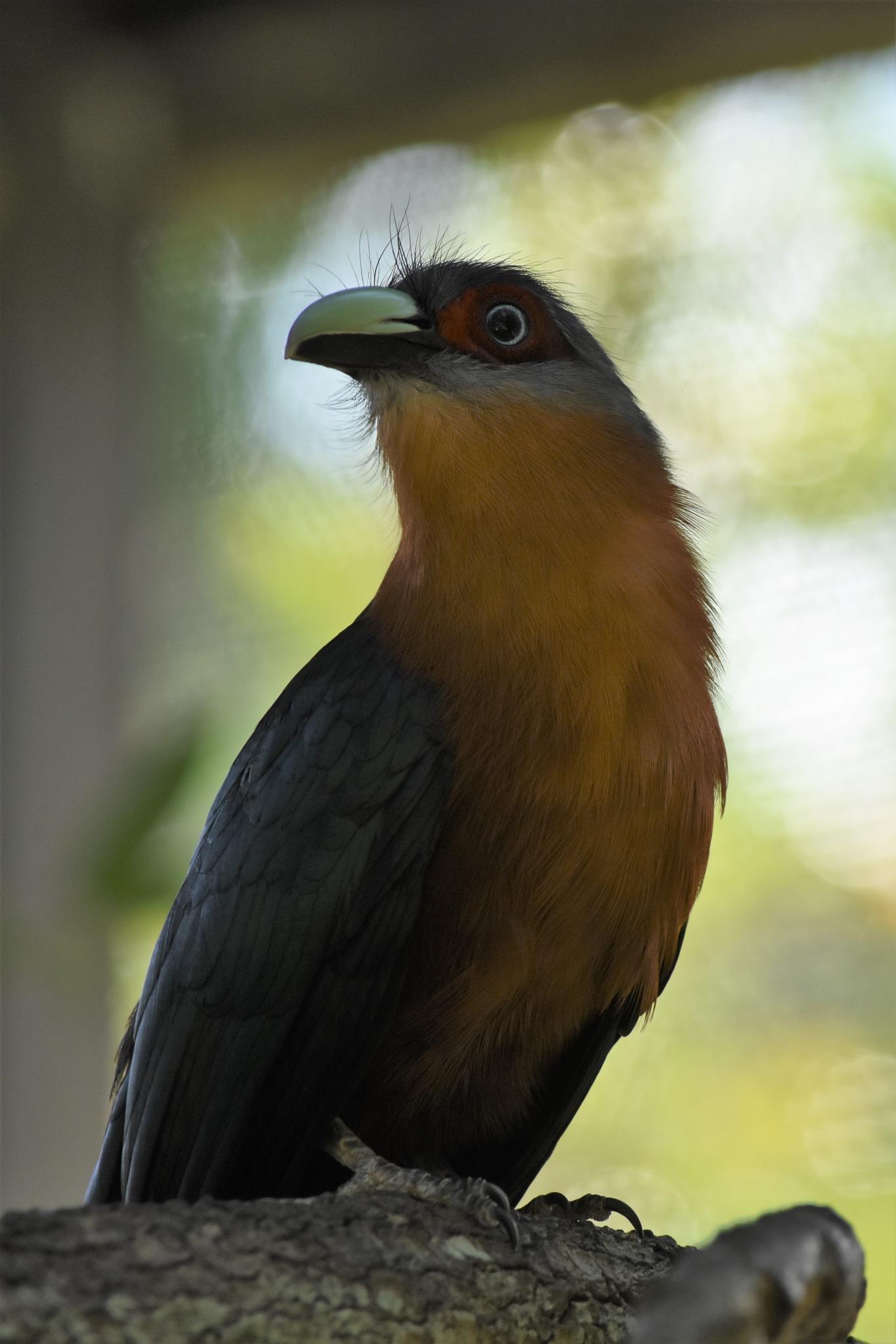 Portrait of a bird by LydiaJeanMay