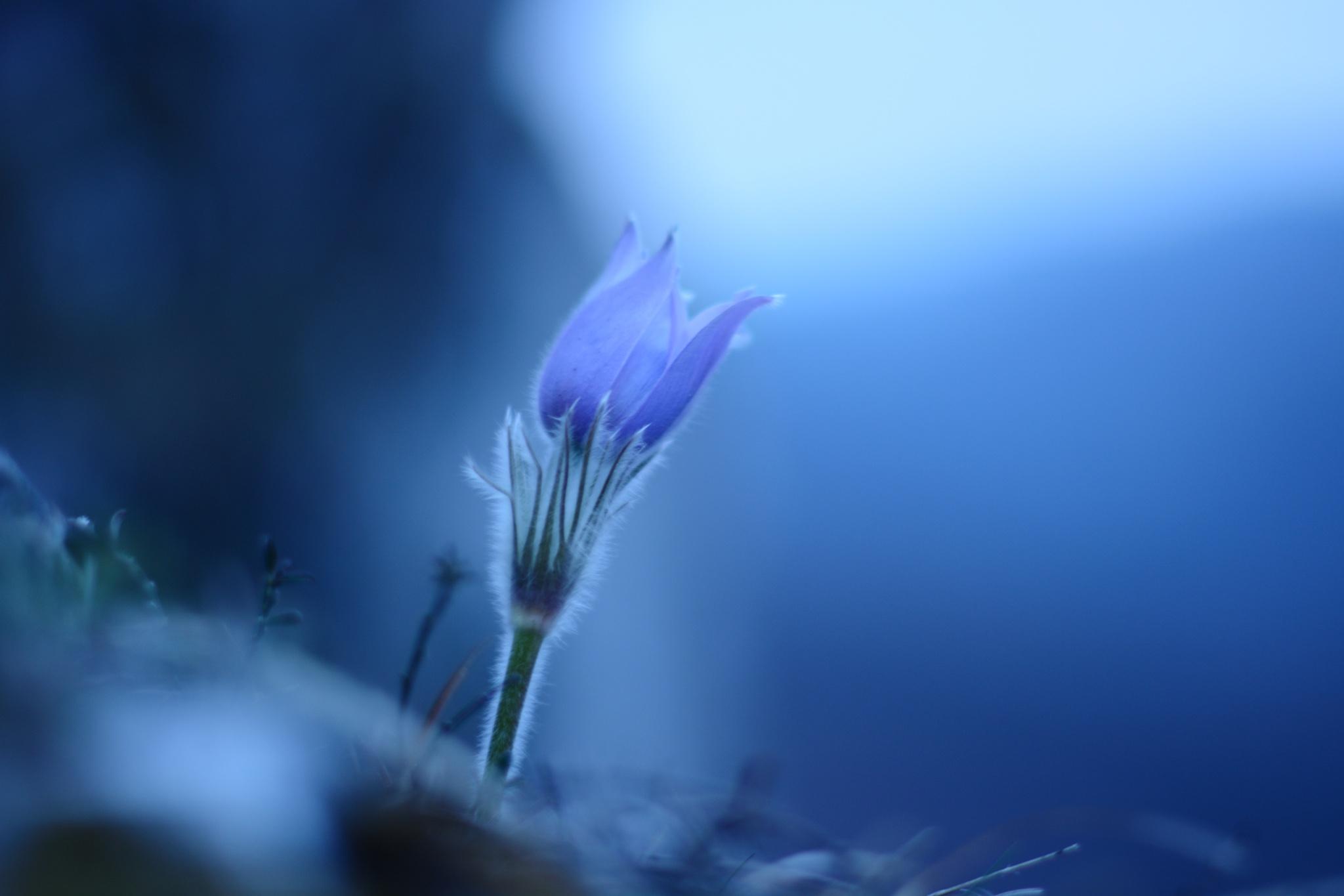 Sneezing light by Herendy Adrienn