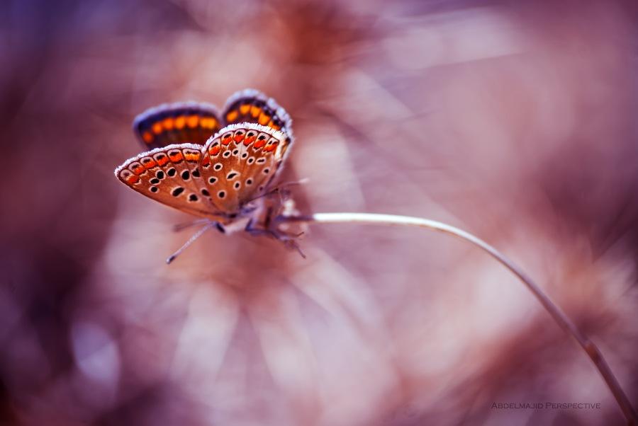 Secret Beauty....!! by Perspective abdelmajid