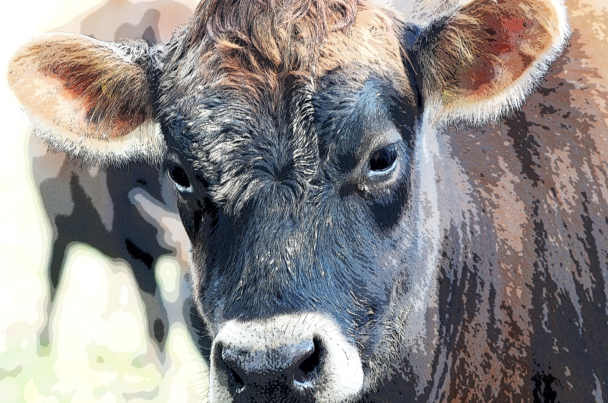 jersey Cow by Chuculain
